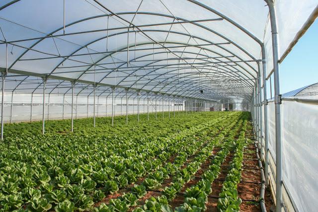 Μαλανδρένι Αργολίδας: Ζητείται Εργάτης Γης για θερμοκήπια