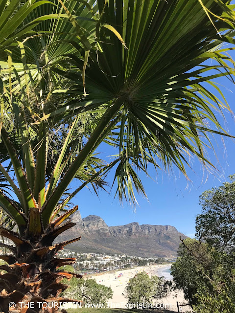 Travel South Africa. Cape Town For Beginners. Camps Bay Beach. Twelve Apostles. Palm trees. Beach houses