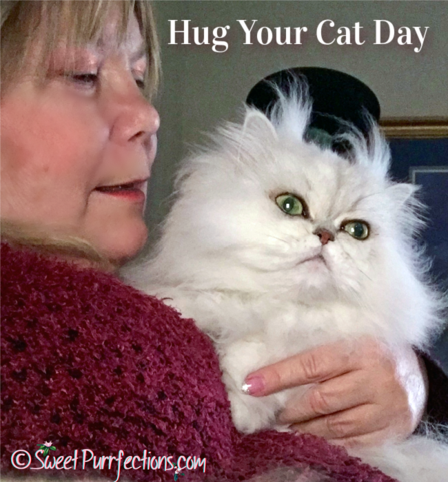 woman holding a silver shaded Persian Cat