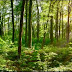 Ce qui faut savoir de l'ingénieur forestier au Cameroun
