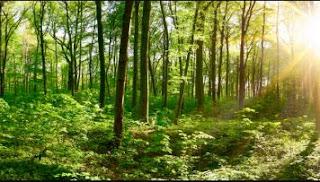 Ce qui faut savoir sur l'ingénieur forestier au Cameroun