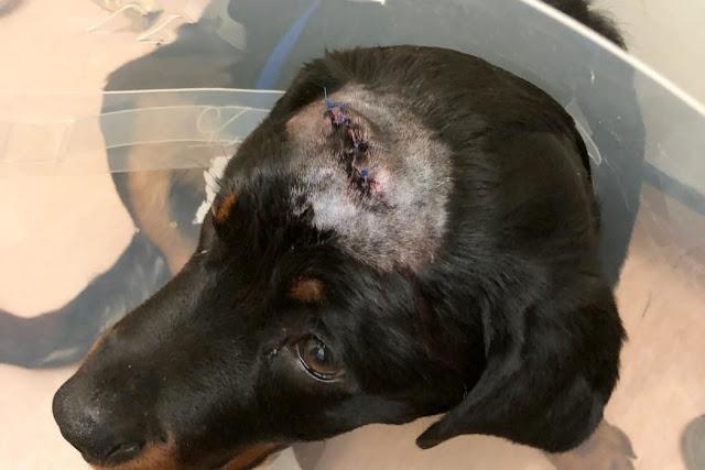 Хозяин и его собака потеряли много крови, но дали отпор грабителям с мачете