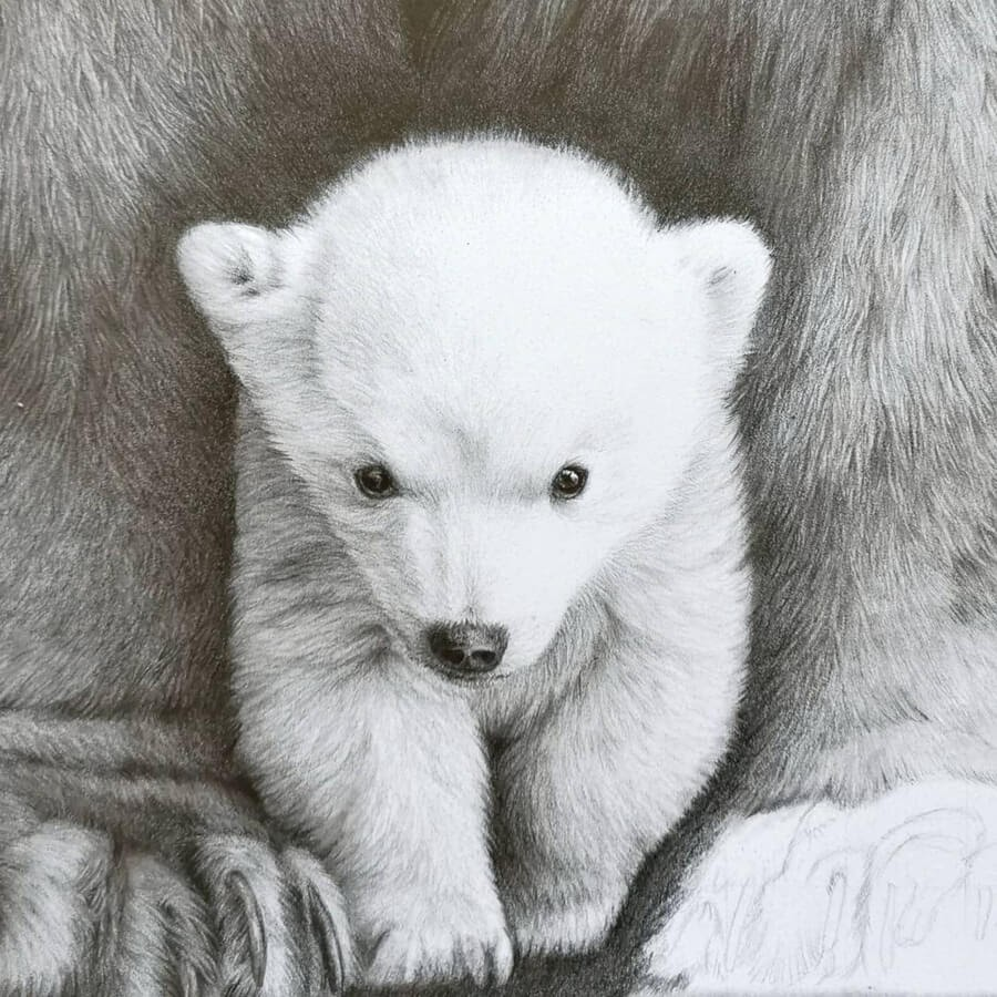 02-Baby-polar-bear-and-mother-Bianca-Buer-www-designstack-co