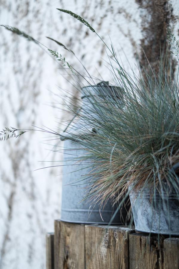 Blog + Fotografie by it's me! | fim.works | Sommerregen im Garten | Segge im Metalltopf, alte Milchkanne