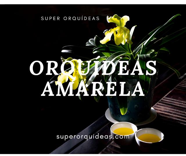 Orquídeas amarela