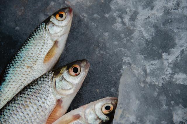 Cara Pilih Ikan Asin Segar dan Tanpa Formalin
