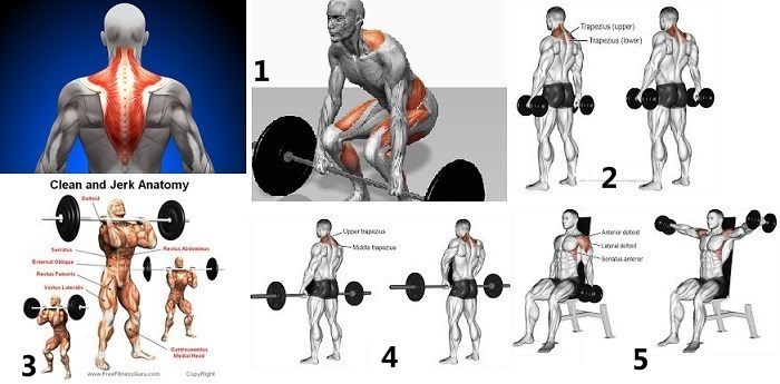 how to get massive shoulders and traps