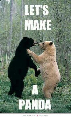 Funny and Cute Memes of Panda