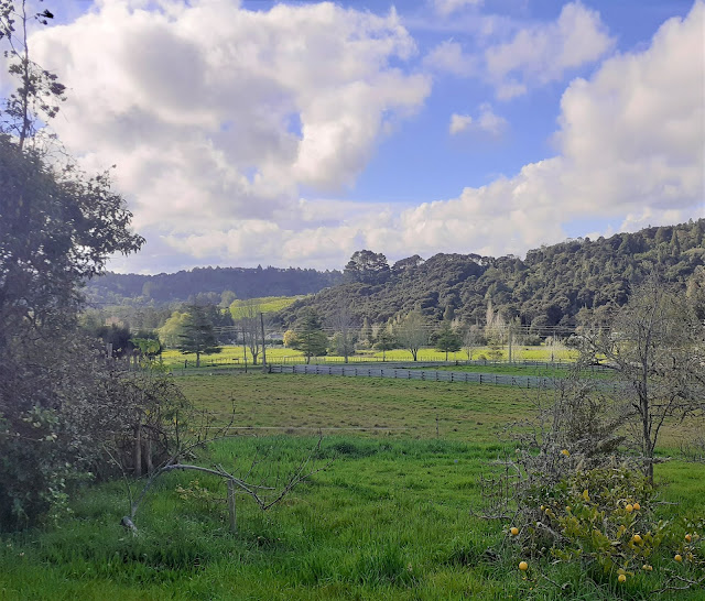 view across the orchard
