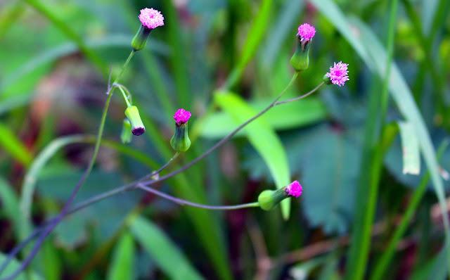Foto Macro Bunga Yang Indah Dari Desa Kebonharjo, Samigaluh, Kulon Progo