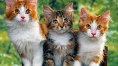 25+ Gambar Kucing Lucu Berduaan