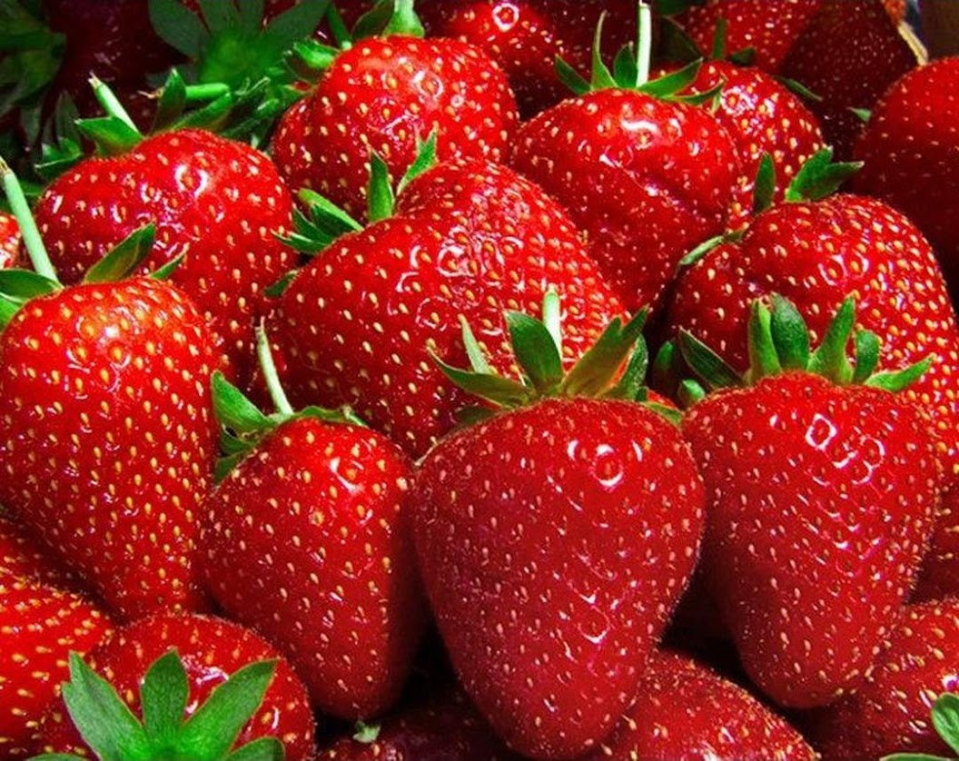 Benih Bibit Biji Giant Strawberry Stroberi Super Jumbo Import Sumatra Selatan