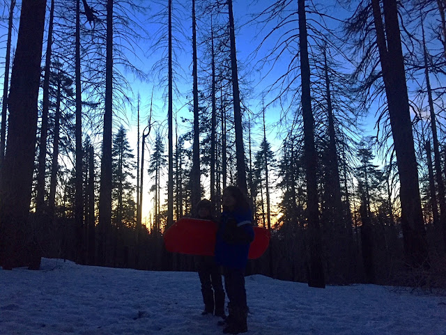 Ziggy-Rocket-Zirocksays-Yosemite-Sledding-Sunset