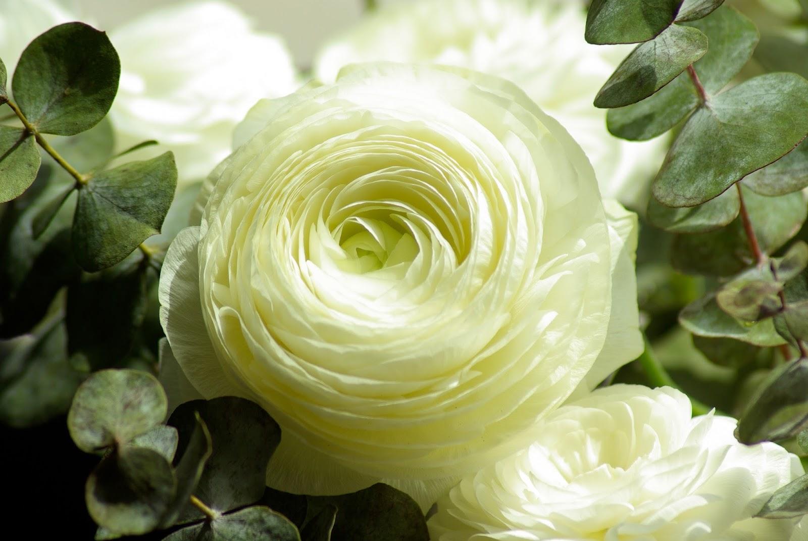 Kalendarz Kwiatow Sezonowych Szalona Panna Mloda