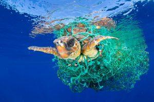 plastic free environment