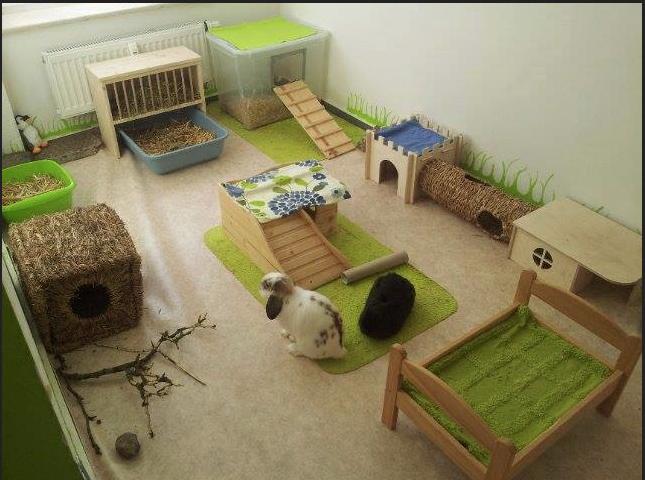 aire de jeux maison pour lapins