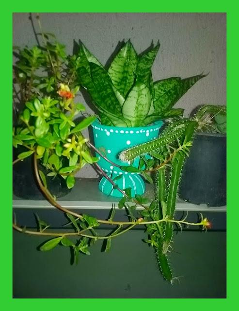 Jardinagem e Artesanato de garrafa pet e potes
