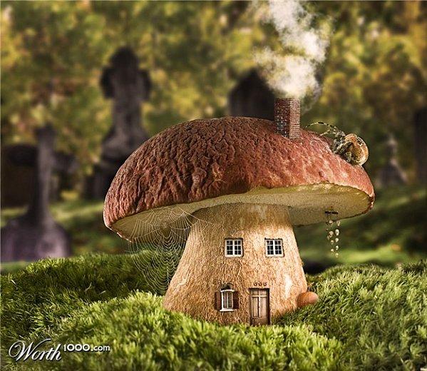 le bl de lune des champignons dans mon panier. Black Bedroom Furniture Sets. Home Design Ideas