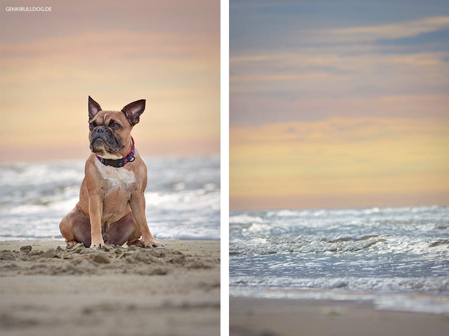 Hundeblog Genki Bulldog - Abenteuer einer französischen Bulldogge - Normandie
