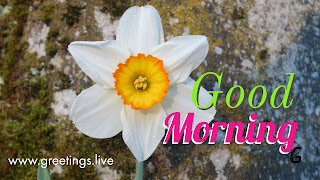 Good-Morning-New-White-flower-greetings-HD
