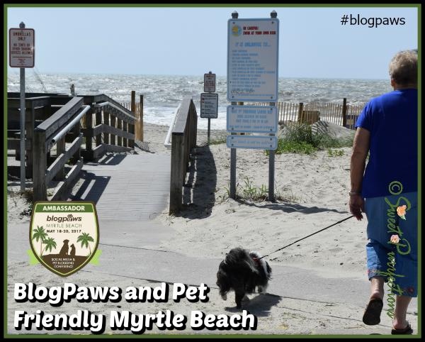 Bandit walking towards the beach at Myrtle Beach