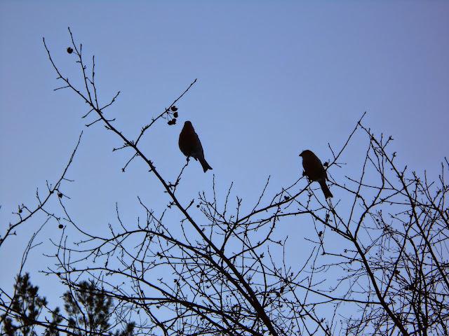 Птички на ветках
