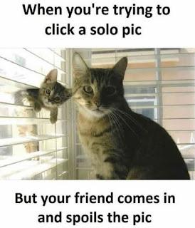 """cat memes"", ""selfie meme"", ""funny Memes"""