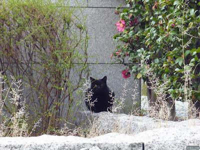 本願寺舊跡真宗大谷派天満別院猫