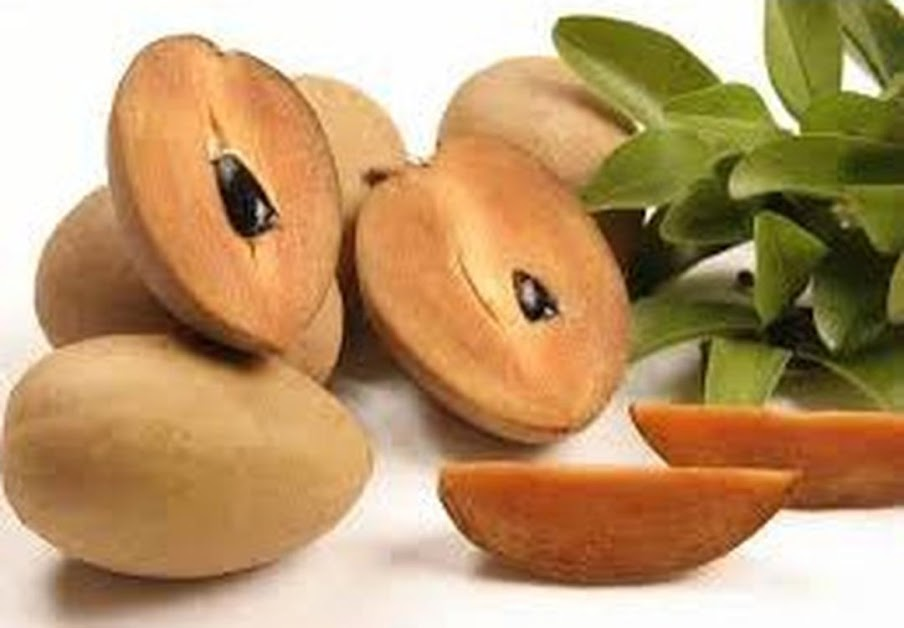 Bibit Tanaman Buah Sawo Manila okulasi cepat buah Sorong
