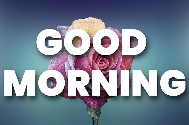 good morning rose images download hd