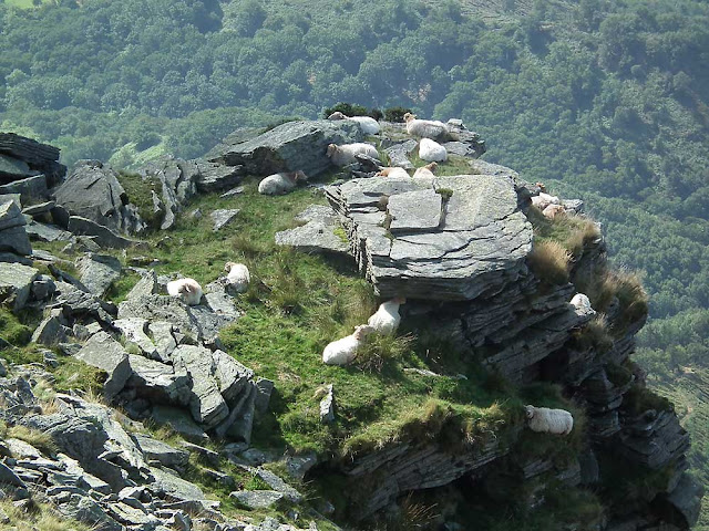 Manech tete rousse sheep on La Rhune, Pyrenees-Atlantiques, France. Photographed by Susan Walter. Tour the Loire Valley with a classic car and a private guide.