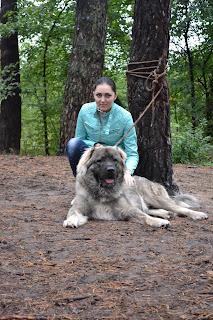 .صور كلب قوقازي