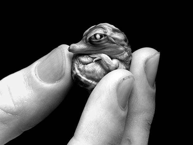 Fotos ternas e poderosas de pequenas criaturas em mão humanas