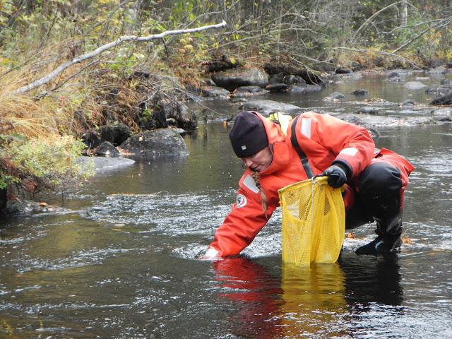 Pelastautumispukuinen henkilö poimii jotakin puron pohjalta keltaiseen verkkopussiin
