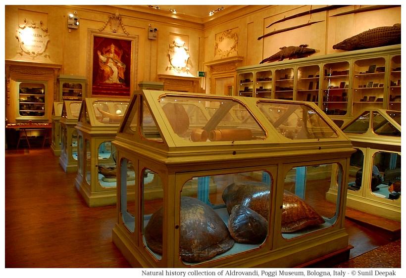 Aldrovandi room at Palazzo Poggi of Bologna, Italy - Image by Sunil Deepak