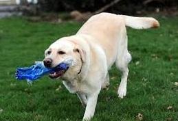 cão brincando com garrafa