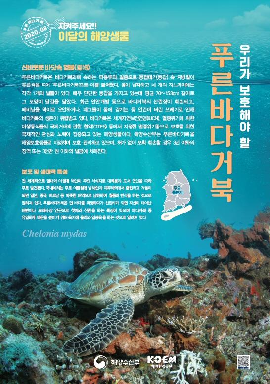 해수부, 2020년 8월 이달의 해양생물 '푸른바다거북' 선정