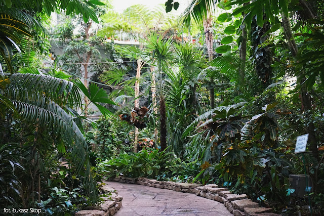 palmy i sagowce w palmiarni