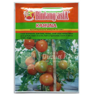 Benih Unggul Tomat Karuna