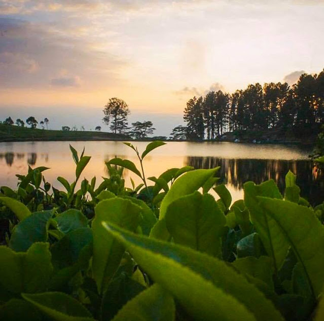 රන් සෙම්බුවක් මතු වූ - සෙම්බුවත්ත 🌲🏺🌱 (Sembuwatta Lake 🍀) - Your Choice Way