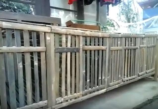 Kandang Kelinci Dari Bambu Sederhana