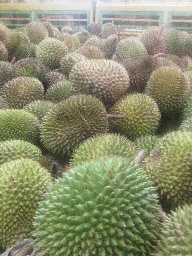 Durian Palopo