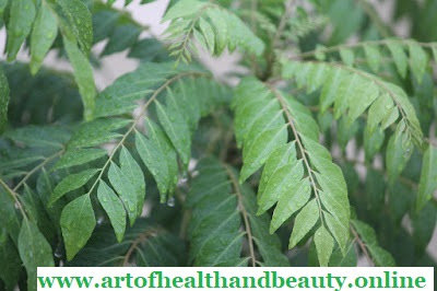How Curry leaves help in hair fall?