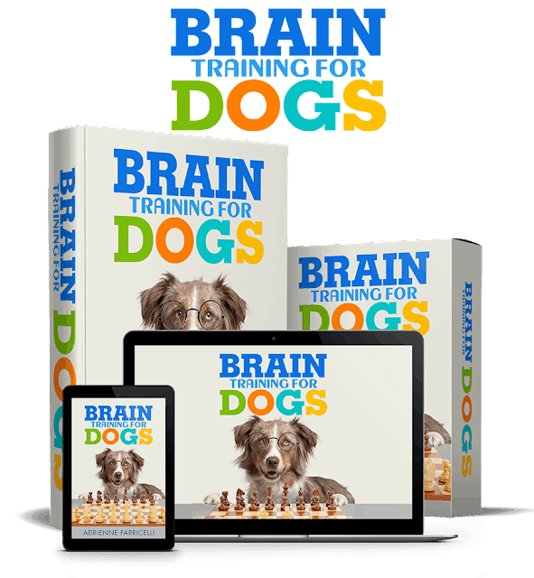 Brain training for dogs,training for dogs near me,obedience training for dogs,training for dogs Adrienne Farricelli,clicker training for dog,agility training for dogs,training for dogs with aggression,shock collar training for dogs,e collar training for dogs,training whistle for dog,basic training for dog,training for dogs with anxiety,training for dogs who bite,training for aggressive dog behavior,brain training for dog,training for dog show,e training for dogs,e collar training for aggressive dogs