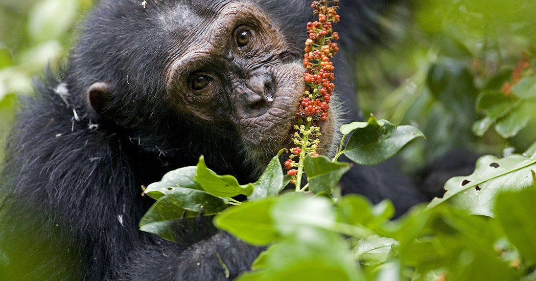 Humerus Revelations of the Naked Ape: Spotlight on