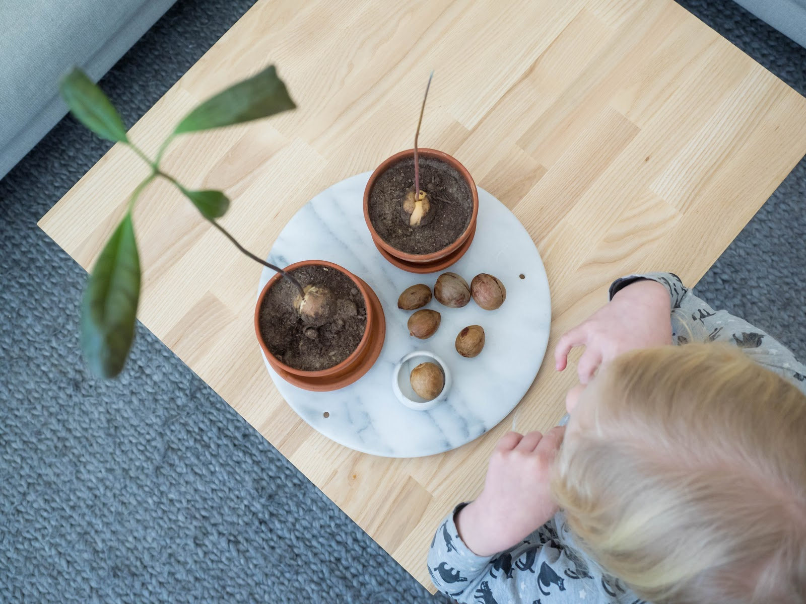 Avokadon viljelijä pieni tyttö