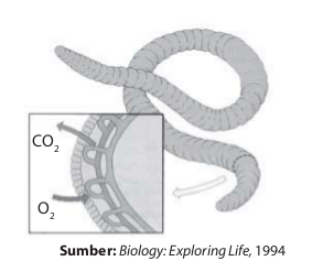 Cacing menggunakan kulitnya untuk bernapas.