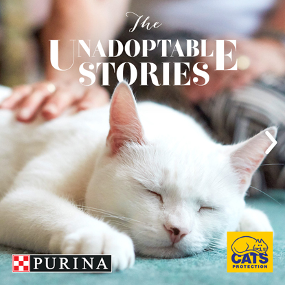 white cat Purina and Cats Protection