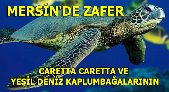 MERSİN, Mersin Haber, MERSİN SON DAKİKA, Anamur Haber,