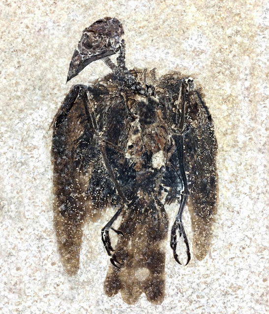 Earliest known seed-eating perching bird discovered in Fossil Lake, Wyoming